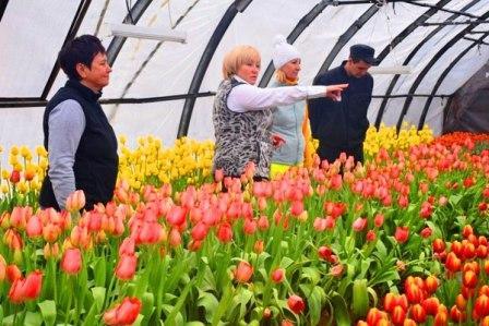 Самарские осужденные собрали первый урожай тюльпанов